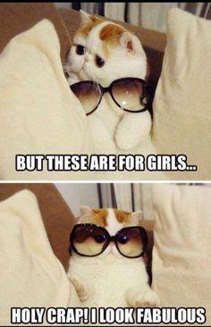 Fabulous cat! :)