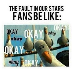 "This person, who's got a lot of gull: | 21 Jokes Only ""The Fault In Our Stars"" Fans Will Understand"