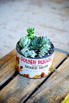 Vintage Succulent Garden #DIY