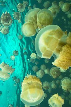 Jelly fish by Gabriel de Leon