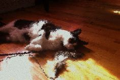 World's greatest cat Impressionified from another angle using @NYBG app. #monetsgarden #cats