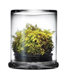 Moss Terrarium ~via Real Simple