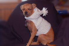 Summer Dog Hoodie Crochet pattern --  Only $1.99  Posh Pooch Designs Dog Clothes