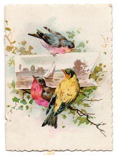 Vintage bird image
