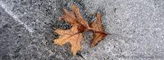 Oak leaf in Hidden Lake ice on the White Trail at Camp #Yawgoog, Rockville, Hopkinton, Rhode Island (RI).  Image by David R. Brierley.