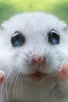 hamster love!