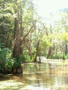 my favorite pic i took at HONEY ISLAND SWAMP in slidell louisiana