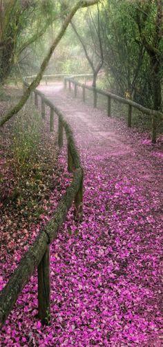 Sevilla sendero, path