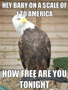 American Pick Up Line