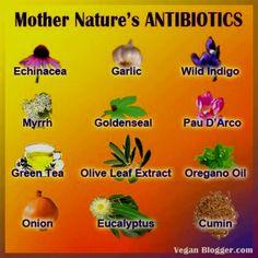 these are some other amazing examples of natural antibiotics: Echinacea - Garlic - Wild Indigo - Myrrh - Goldenseal - Pau D'Arco - Green Tea - Olive Leaf Extract - Oregano Oil - Onion - Eucalyptus - Cumin