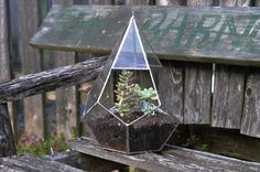 Teardrop Terrarium Kit, large teardrop glass terrarium -- ABJglassworks on Etsy. Beautiful