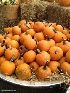 small pumpkins and guords