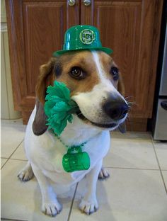 Loving Green Dog via 25 Ridiculously Cute St. Patrick's Day Pets
