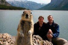 Squirrel photobomb