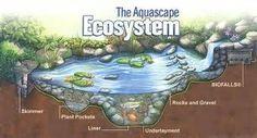 water gardens design