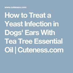 Communication on this topic: How to Soothe a Dogs Itchy Ears, how-to-soothe-a-dogs-itchy-ears/