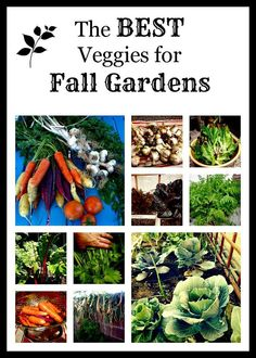 Best Veggies to Plant for Fall! - Homespun Sprout
