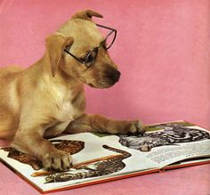 Dogs That Love Reading