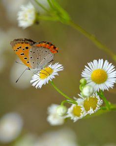 Butterfly on wild flower