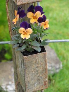 sweet flower garden, fenc, vintage tins, mail boxes, flowers garden, little flowers, flower boxes, pansi, cold weather