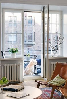 living room + dog + balcony