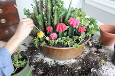 How to create a succulent garden in a container.