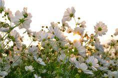 Pretty flowers ...