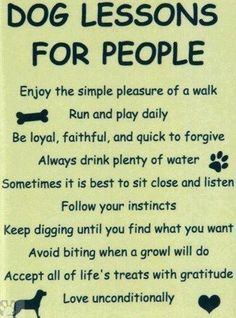 Lessons for people from dogs...