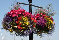 I want to make these for the deck. Canada Day Hanging Baskets by ngawangchodron, via Flickr)