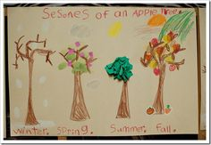 Life cycle of the apple tree with seasons