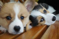 Puppies #chicos