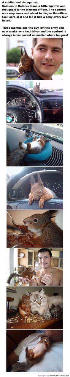 :) Squirrel best friend!..haha that cat doesnt look very happy to have the squirrel around..lol..
