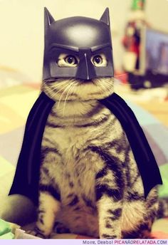 batcat, robin, kitten, hero, cat women, halloween costumes, funny pictures, batman, dog
