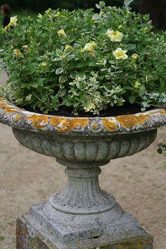garden urn, planter, for my garden, flowers