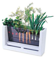 Gives students the opportunity to watch vegetables grow before their very eyes.