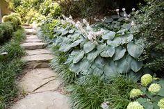 fern, yard, shade garden