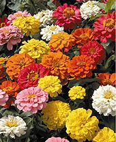 High Heat Flowers For Hot Summer Areas