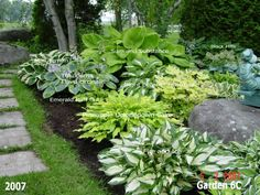 Beautiful hosta garden. Lots of photos with names of the plants on them.