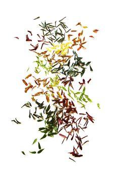 sumac leaves (mary jo hoffman)