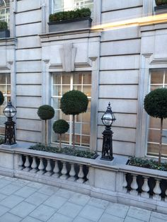 London city topiary in yew