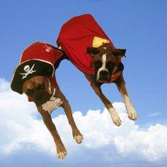 Super puppies!