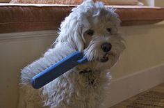 Click on the photo above to learn how to groom a dog the proper way.