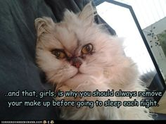 funny cat pictures - ..and that, girls, is why you should always remove your make up before going to sleep each night.