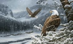 ...as the eagles fly