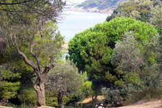 Banana Beach, Skiathos, Greece About 30 minutes from Skiathos, at the southwestern tip of the island are these three nude beaches. A crescent of sand and sparkling waters, the beach is shaded at the back. There's a small taverna selling light snacks and there are umbrellas and loungers for hire.  From the beach there are views of the Pelion and dolphins can often be seen frolicking in the waters.  Big Banana is very popular but Little Banana Beach, also known as Spartacus Beach, has taken over a