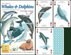 Whales & Dolphins Playing Cards at theBIGzoo.com, a family-owned toy store.