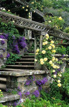 terrac, campanula portenschlagiana, stair, north wales, bodnant gardens golden showers, herbs garden, stone, yellow roses, flower
