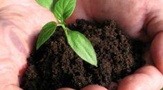 Regrow your vegetables year-round plant, regrow veget, idea, flower tree, lasagna garden, notil method, flowering trees, veget yearround, autism prayer