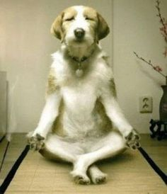 cat, family dogs, funny dogs, pet, inner peace, puppi, yoga, friend, animal