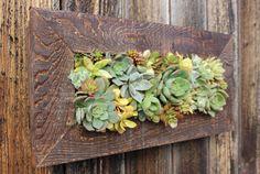 Indoor/Outdoor Living wall. 100 Handmade Cedar by OneWithPlants, $100.00
